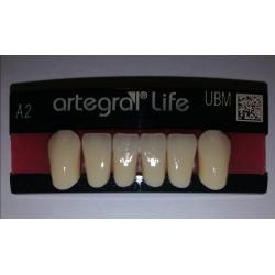 Artegral Life zęby przednie...