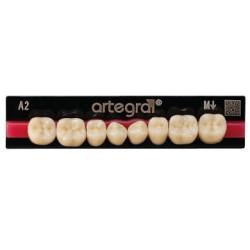 Artegral zęby boczne dół