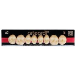 Artegral zęby boczne góra