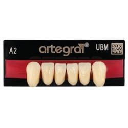 Artegral zęby przednie dół