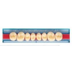 DeltaForm zęby boczne górne