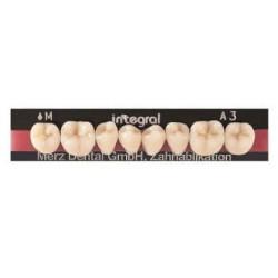 Integral zęby boczne dolne