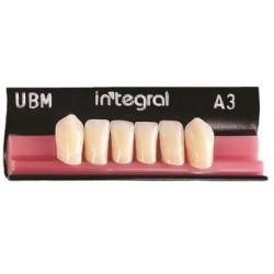 Integral zęby przednie dolne